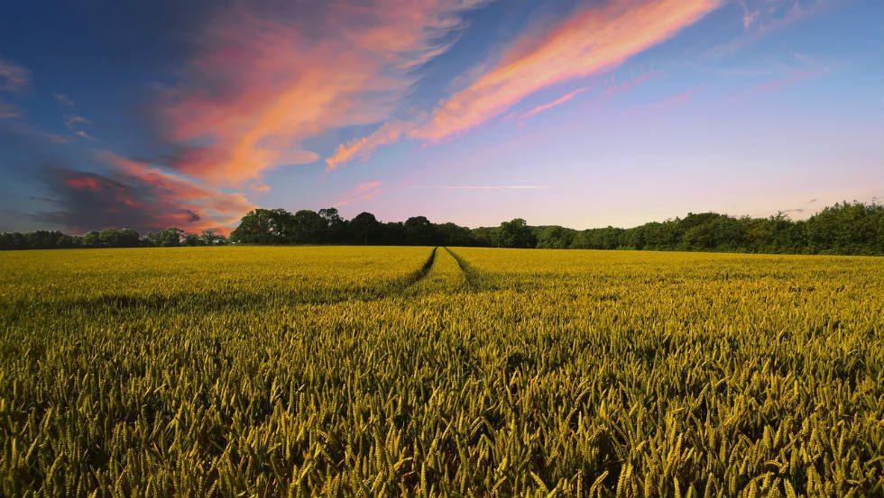 Melhorar o nível de segurança alimentar é o desafio atual. É nesse cenário que a biofortificação surge como uma boa solução. foto: Pixabay