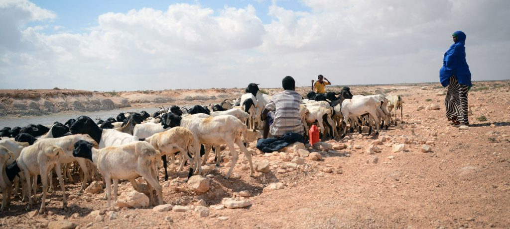ONU destaca urgência de ação climática após agência meteorológica confirmar aquecimento global recorde