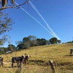 Projeto facilita a atividade de monitorar a população de gado, iniciativa essencial na gestão das fazendas pecuárias - foto: Radar do Futuro