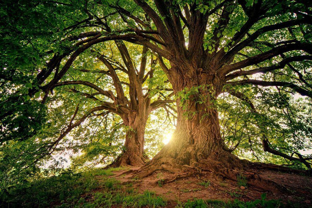 As árvores são responsáveis pela umidade do ar e pelas chuvas regulares. Foto: Pixabay.