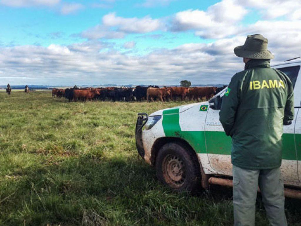 fiscal do ibama contempla os efeitos do desmatamento da Amazônia com a ocupação de gado