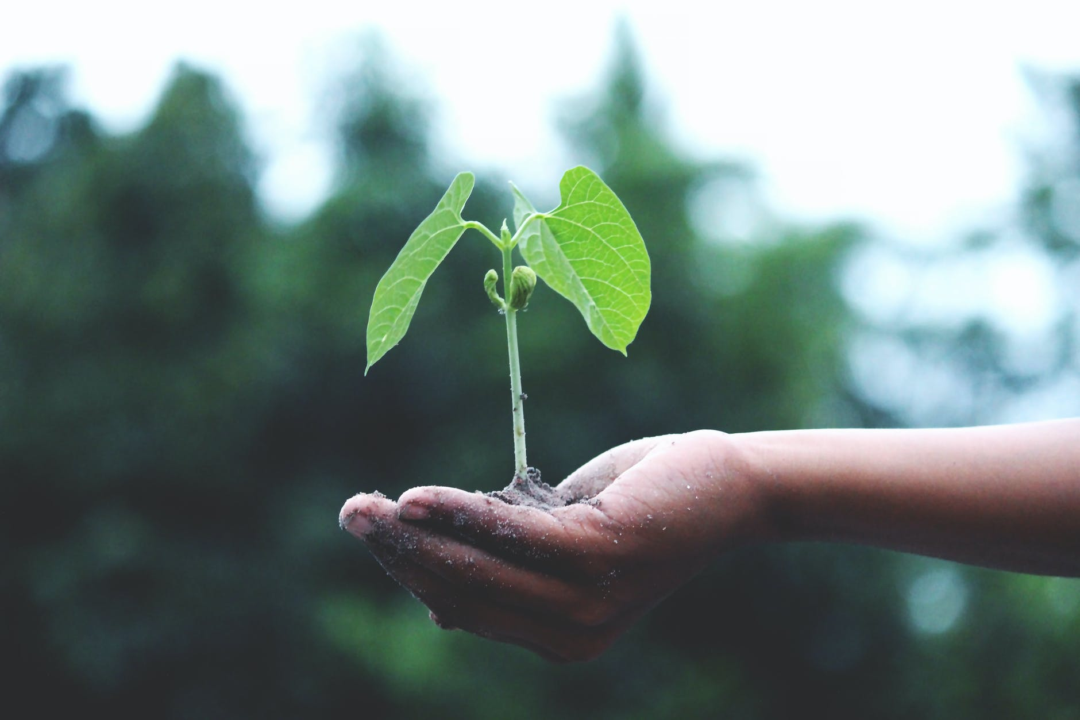 person holding a green plant pessoa mosta uma planta verde  ações sustentáveis